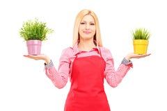 Ein blonder weiblicher Gärtner, der zwei Topfpflanzen hält Lizenzfreie Stockfotografie