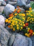 Ein Blumenaufbau Lizenzfreies Stockbild