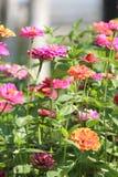 Ein Blumenbeet am Mittag Lizenzfreies Stockfoto