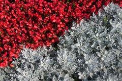 Ein Blumenbeet von grauen und roten Farben Stockfotografie