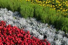 Ein Blumenbeet von grauen und roten Farben Stockfoto