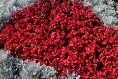 Ein Blumenbeet von grauen und roten Farben Stockbilder