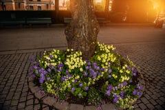 Ein Blumenbeet von Petunien und von kleinen Blumen um den Baum bei Sonnenuntergang in der Sonne Stockbild