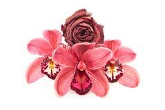 Ein Blumengeschenk Stockbilder