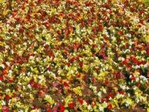 Ein Blumenhintergrund - stilisiert zum Malen Lizenzfreie Stockfotografie