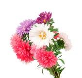 Ein Blumenstrauß der Astern Stockfotografie