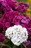 Ein Blumenstrauß der Blumen Lizenzfreies Stockfoto