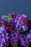 Ein Blumenstrauß der Flieder auf einem dunklen Hintergrund Stockfotos