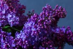 Ein Blumenstrauß der Flieder auf einem dunklen Hintergrund Lizenzfreie Stockfotografie
