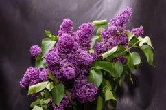 Ein Blumenstrauß der Flieder auf einer dunklen Hintergrundnahaufnahme Stockfotos