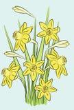 Ein Blumenstrauß der Narzissen Stockfoto