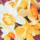 Ein Blumenstrauß der Narzissennahaufnahme der frischen Blumen Lizenzfreie Stockfotografie