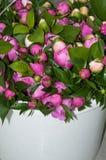 Ein Blumenstrauß der rosa Pfingstrose Stockfotos