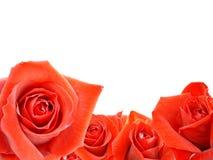 Ein Blumenstrauß der roten Rosen Lizenzfreies Stockbild