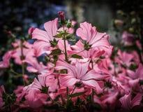 Ein Blumenstrauß im Rosa Stockfotografie