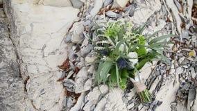 Ein Blumenstrauß im Stil eines boho, rustikal für eine Herbsthochzeit stock footage