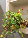 Ein Blumenstrauß im Wandschrank stockbilder