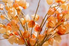 Ein Blumenstrauß Physalis von Trockenblumen auf unscharfem Hintergrund stockbild