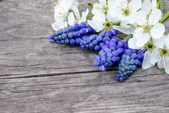 Ein Blumenstrauß von blauen Glocken auf den alten, hölzernen Brettern, mit weißen Blumen der Kirsche, Glockenblumen Ansicht von o stockfotos