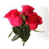 Ein Blumenstrauß von drei Lügen der roten Rosen auf einem weißen Hintergrund stockfotografie