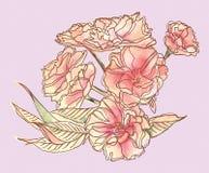 Ein Blumenstrauß von empfindlichen Blumen Viele Blumen und Blätter lizenzfreie abbildung