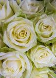 Ein Blumenstrauß von frischen schönen weißen Rosen in einem Vase lizenzfreies stockbild