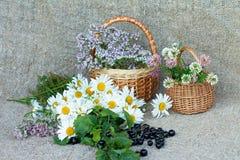 Ein Blumenstrauß von Gänseblümchen Lizenzfreies Stockfoto