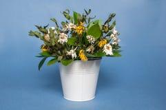 Ein Blumenstrauß von Gänseblümchen in einem Eimer Stockfotografie