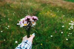 Ein Blumenstrauß von hellen Wildflowers - purpurrote Glocken, Kamille und andere in der Hand einer Frau Wilde Natur Nahaufnahme lizenzfreie stockfotografie