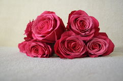 Ein Blumenstrauß von klaren rosa Rosen Stockbild