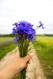 Ein Blumenstrauß von Kornblumen in einer Hand auf einem Hintergrund Stockbild