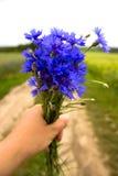 Ein Blumenstrauß von Kornblumen in einer Hand, Hintergrundfeld Stockfotografie