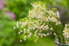Ein Blumenstrauß von Maiglöckchen ist in einem einfachen Glasvase auf einem grünen Hintergrund Hintergrund mit wohlriechenden Mai stockbilder