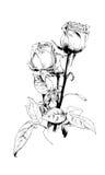Ein Blumenstrauß von Rosen, eigenhändig gezeichnet in Tinte Stockbild
