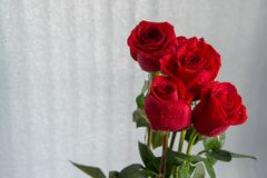 Ein Blumenstrauß von roten schönen Rosen auf einem weißen Hintergrund lizenzfreies stockfoto