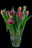 Ein Blumenstrauß von Tulpen lizenzfreie stockbilder