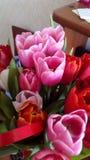 Ein Blumenstrauß von Tulpen als Geschenk für Sie stockfotos