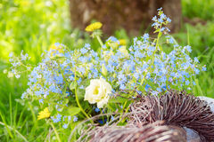Ein Blumenstrauß von vergessen-mir Lizenzfreies Stockbild
