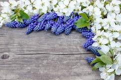 Ein Blumenstrau? von blauen Glocken auf den alten, h?lzernen Brettern, mit wei?en Blumen der Kirsche, Glockenblumen Ansicht von o lizenzfreies stockbild