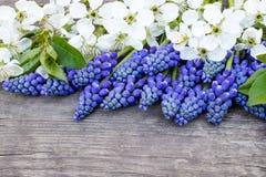 Ein Blumenstrau? von blauen Glocken auf den alten, h?lzernen Brettern, mit wei?en Blumen der Kirsche, Glockenblumen Ansicht von o lizenzfreies stockfoto