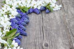 Ein Blumenstrau? von blauen Glocken auf den alten, h?lzernen Brettern, mit wei?en Blumen der Kirsche, Glockenblumen Ansicht von o stockfoto