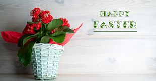 Ein Blumenstrau? von roten Blumen in einem wilkin Topf, gegen einen Hintergrund des Holzes stockbild