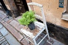 Ein Blumentopf auf einem alten Stuhl auf einer Straße Lizenzfreie Stockfotos