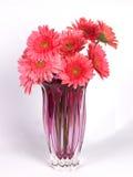 ein Blumenvase mit rosafarbenen Gänseblümchenblumen Lizenzfreie Stockfotografie