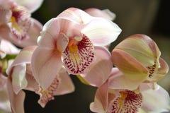 Ein Blumenwachsendes in einem tropischen Klima Lizenzfreie Stockfotos