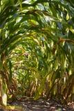 Ein Bogen von Maisblättern lizenzfreie stockfotografie