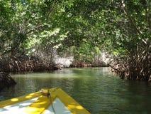 Ein Boot, das Mangroven durchläuft lizenzfreies stockfoto