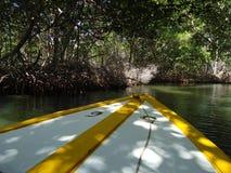 Ein Boot, das Mangroven durchläuft stockfotos