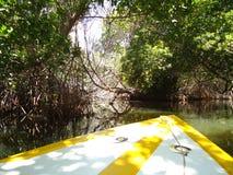 Ein Boot, das Mangroven durchläuft stockbild