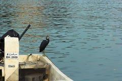 Ein Boot mit einem Reiher in Bahrain Stockbild